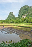 Landbouwers die rijst planten. Stock Afbeeldingen