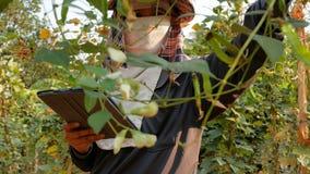 Landbouwers die technologie sparen landbouwgegevens gebruiken te helpen stock footage