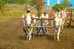 Landbouwers die zaden met behulp van witte stieren en ploeg zaaien dichtbij Velha stock foto