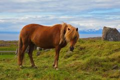Landbouwers glad paard Royalty-vrije Stock Foto