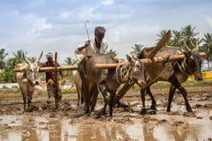 Landbouwers het ploegen Royalty-vrije Stock Afbeeldingen