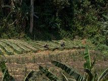 Landbouwers het werken Royalty-vrije Stock Afbeeldingen