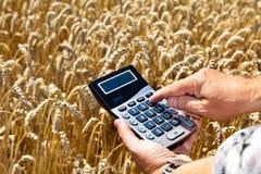 Landbouwers met een calculator op graangewassendoos Stock Fotografie
