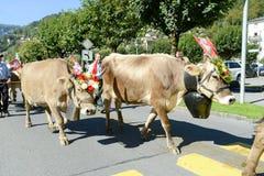 Landbouwers met een kudde van koeien op jaarlijkse transhumance in Engelb Royalty-vrije Stock Foto