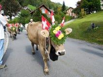Landbouwers met een kudde van koeien op jaarlijkse transhumance op st Stock Afbeelding