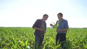 Landbouwers op een gebied van graan stock footage