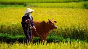 Landbouwers op het werk Stock Fotografie