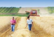 Landbouwers op tarwegebied tijdens oogst stock foto's