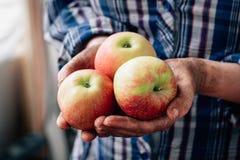 Landbouwers` s hand die verse en rijpe appelen van nieuwe oogst houden stock foto's