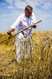 Landbouwers scherpe tarwe Stock Afbeelding