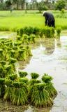 Landbouwers in traditioneel Thailand stock afbeeldingen