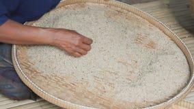 Landbouwers uitgezochte slechte rijst uit de padie stock footage