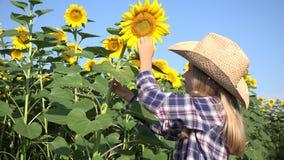 Landbouwerskind op zonnebloemgebied, meisje die het spelen in agrarische oogst 4K bestuderen