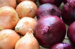 Landbouwersmarkt, verse uien op rustieke houten bank, Royalty-vrije Stock Foto's