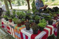 Landbouwersmarktkraam met divers soort aromatische kruiden op vazen voor verkoop stock afbeeldingen