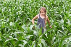 Landbouwersmeisje die het het groeien graan inspecteren stock foto's