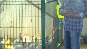 Landbouwersmens die tabletcomputer met behulp van, die kwaliteit in het landbouwbedrijf van de gevogeltekip, het landbouwbedrijf  stock videobeelden