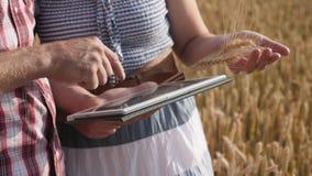 Landbouwerspaar die digitale tabletcomputer op rijp tarwegebied met behulp van stock videobeelden