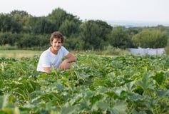 Landbouwerszitting op het courgettegebied bij organisch landbouwbedrijf Royalty-vrije Stock Foto's