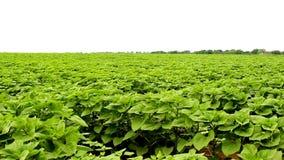Landbouwgebied stock footage