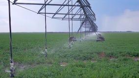 Landbouwgebied, industrieel sproeier bespuitend water op land met raapzaadgewas stock videobeelden