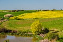 Landbouwgebied met raapzaad en weiden stock foto's