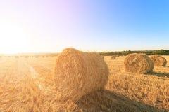 Landbouwgebied na het oogsten van tarwe De broodjes van hooi zijn in tegenovergesteld licht royalty-vrije stock foto's