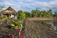 Landbouwgebied - Platteland in Zuidoost-Azië Royalty-vrije Stock Afbeelding