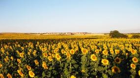Landbouwgebieden in de herfst royalty-vrije stock foto