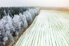 Landbouwgebieden in de vroege lente Bomen in rijpantenne royalty-vrije stock foto