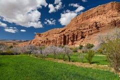 Landbouwgebieden, Marokko Stock Foto's