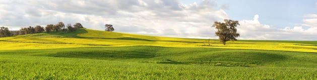 Landbouwgebieden van canola en weilanden in de lente Stock Afbeelding