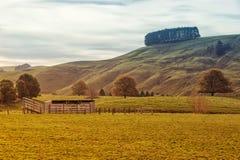Landbouwgrond in Australië royalty-vrije stock fotografie