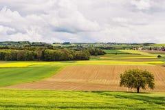 Landbouwgrond in de lente royalty-vrije stock foto's