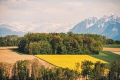 Landbouwgrond in de lente stock foto's