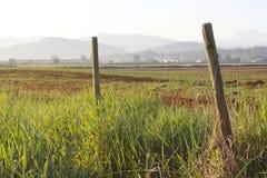 Landbouwgrond in de Vallei Fraser royalty-vrije stock foto