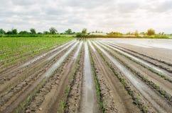 Landbouwgrond die door te overstromen wordt beïnvloed Overstroomd gebied De gevolgen van regen Landbouw en de Landbouw Natuurramp royalty-vrije stock afbeeldingen