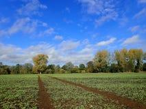 Landbouwgrond door de Rivier Colne, dichtbij Aldenham, Hertfordshire stock foto's