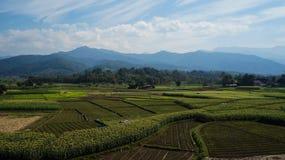 Landbouwgrond en blauwe hemel Stock Afbeeldingen
