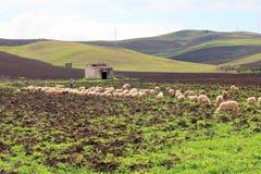 Landbouwgrond en heuvels in Trapan stock foto