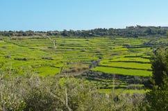 Landbouwgrond in Malta Stock Afbeeldingen