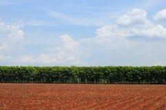 Landbouwgrond met blauwe hemelmening Stock Fotografie