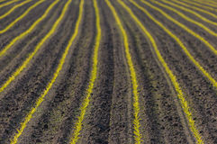 Landbouwgrond met jonge graanspruiten royalty-vrije stock foto's