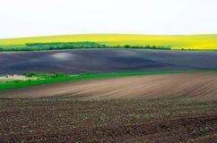 Landbouwgrond met koolzaad en jonge tarwe en jonge zonnebloem Stock Foto's