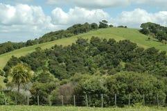 Landbouwgrond op het Noordeneiland, Nieuw Zeeland stock afbeeldingen