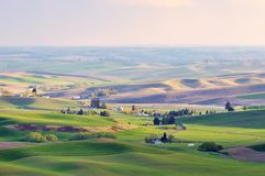 Landbouwgrond in Palouse Washington stock afbeeldingen