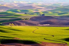 Landbouwgrond in Palouse Washington Royalty-vrije Stock Foto