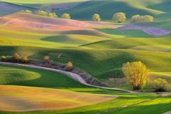 Landbouwgrond in Palouse Washington Stock Afbeeldingen