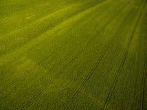 Landbouwgrond van bovengenoemd - luchtbeeld van weelderige ingediend groen Stock Afbeeldingen