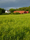 Landbouwgrond in Zacht licht. Royalty-vrije Stock Foto